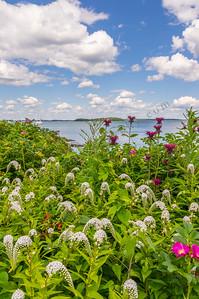 Seaside Garden 5, Falmouth, Maine