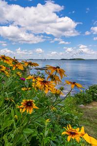 Seaside Garden 2, Falmouth, Maine