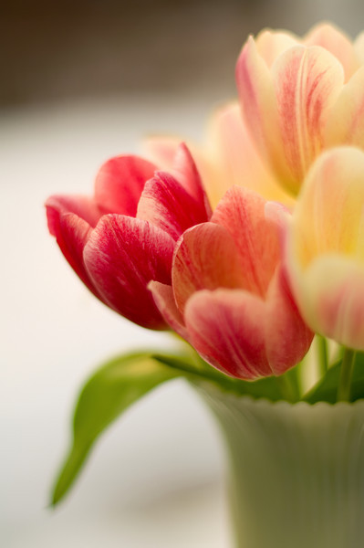 Martha's Tulips