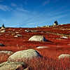 Sedgwick, Maine blueberry barrens