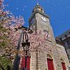 First Parish Church at Cherry Blossom Time, Portland, Maine