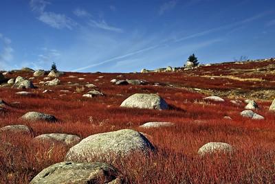 Sedgwick Blueberry Barrens in Autumn Sedgwick, Maine