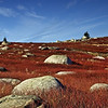 Sedgwick Blueberry Barrens in Autumn<br /> Sedgwick, Maine