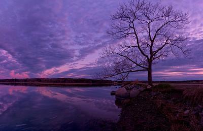 Lone Tree at Sunset, Scarborough Marsh, Maine, Panorama
