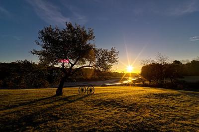 Apple Tree at sunrise, River Road, York