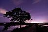 Lone Tree at Night, Scarborough Marsh