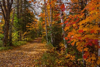 Somerset Road, Autumn Vista, Greenville, Maine area