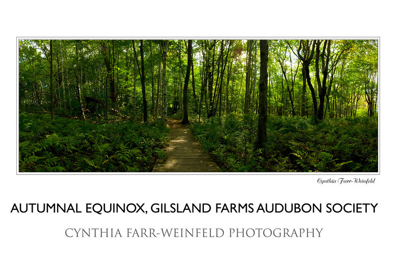 Autumnal Equinox at Gilsland Farms, Audubon Society meadow trail.<br /> Make sure when you order any panoramic posters to check the NO CROPPING option as they guide you through the order process.