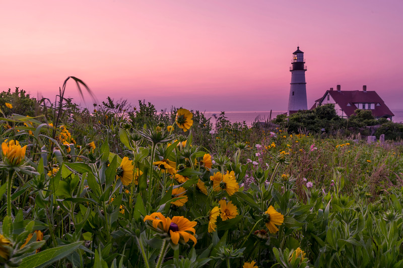 The Flowers of Portland Head Light at Dawn
