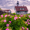 Wild Rosa Rugosa at Portland Head Light, Cape Elizabeth, ME