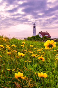The Flowers of Portland Head Light, Cape Elizabeth, ME 2