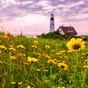 The Flowers of Portland Head Light, Cape Elizabeth, ME 2