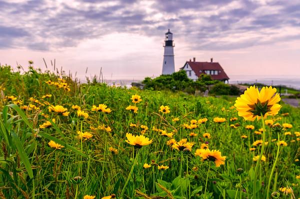 The Flowers of Portland Head Light,  Cape Elizabeth, Maine