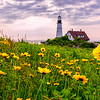 The Flowers of Portland Head Light,  Cape Elizabeth, Maine