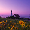 The Flowers of Portland Head Light at Dawn 2
