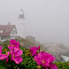 My Wild Lighthouse Rose, Portland Headlight, May 2008.