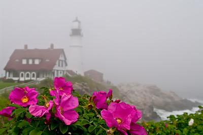 My Wild Lighthouse Rose, Portland Headlight, May 2008.