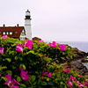 My Wild Lighthouse Rose, Portland Head Light, Cape Elizabeth, Maine