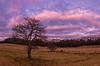 Westbrook Apple Trees Panorama