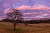 Westbrook Apple Trees Panorama