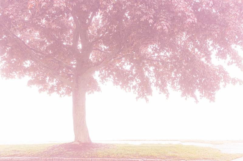 Heavenly Tree, East End, Portland, Maine
