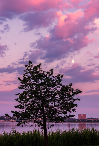 Lone Tree Sunset and Moonrise over Portland, Maine