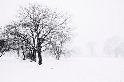 Winter Trees, South Portland, Maine