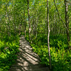Laird-Norton Trail, Wells Preserve, Panorama 4, Wells, Maine