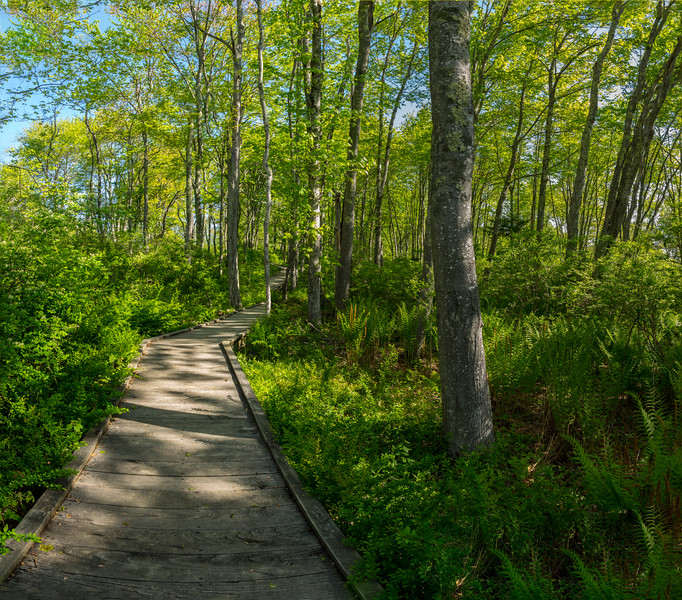 Laird Norton Trail, Laudholm Preserve, Wells Maine, Pano 1
