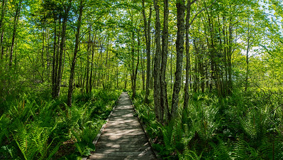 Laird-Norton Trail, Laudholm Trust, Wells, Maine Pano 3