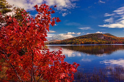 Red Maple, North Lake, Bethel, Maine