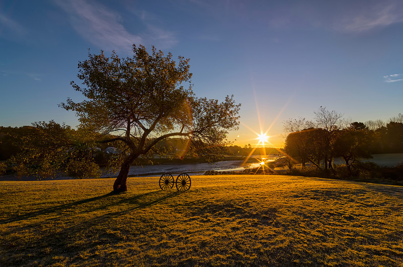 One apple tree graces a sun-drenched field overlooking the river on River Road in York, Maine.