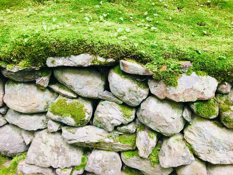 Moss Carpeted Wall