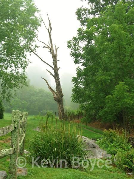 Tree, Choates Ford, TN