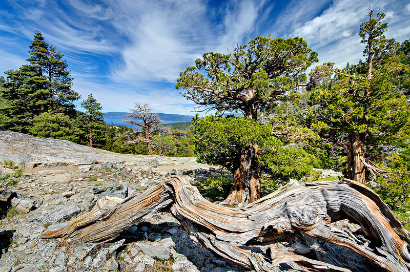 """""""Twisted Pine and Wispy Clouds over Emerald Bay Lake Tahoe"""" - This is in the Desolation Wilderness on the way to Eagle Lake in Lake Tahoe. I didn't realize just how similar the twisted pine in the foreground was to the clouds up above! Emerald Bay in Lake Tahoe is in the background. Enjoy!"""