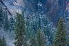 Tree-in-the-Granite-Cliffs-Yosemite-National-Park-Fall-Colors-Winter-Snow-Yosemite-Fine-Art-Photography-Heathcare-Fine-Art-Photography_D817941