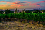 Livermore-Wine-Country-Palm-Event-Center-Sunset-Northern-California_D8X8150