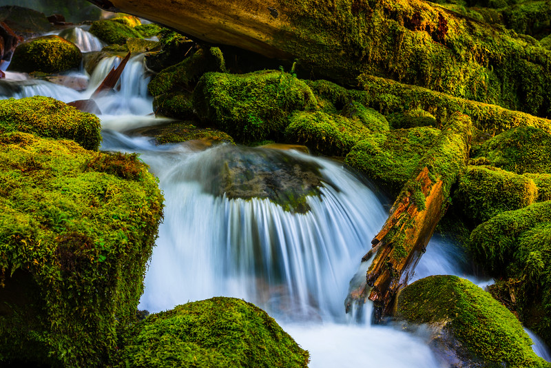 """Flowing Through the Moss"""