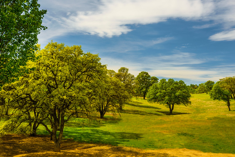 """""""Oaks in the Meadow"""""""