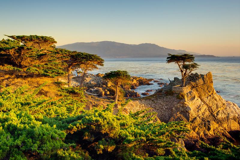 """Lone Cypress at Sunset"""