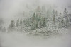 """""""Trees Appearing in the Snow"""" in Yosemite National Park"""