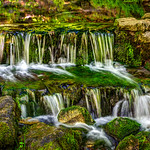 """Fern Springs in Yosemite National Park"