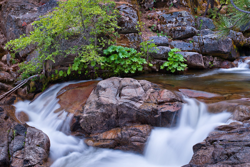 """""""Cascades Creek and Waterfall Flowing in Summer""""  The Cascades were still raging this year with the late snows melting into summer.  This peaceful spot with the trees and rocks was a perfect place to relax here in Yosemite National Park.  Little hints of green, some lichen and wildflowers make for hidden treasures in the setting."""