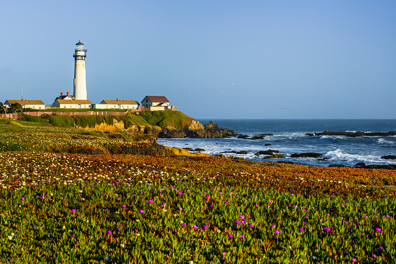 """Pigeon Point Lighthouse at Sunset"" The Purple and white flowers here with the waves along the shore. The Pigeon Point Lighthouse is basking in late afternoon sun. edit"