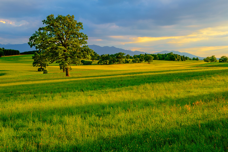 """""""Fields at Sunset""""  This setting could be anywhere in the world.  With the rolling green grasses, trees along the hills and mountains in the background.  The long shadows at sunset and streaks of light coming through.  This is another one of those places that I would sit for days!  Who is ready to go?!"""