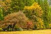 """""""Fall Color Scene in Yosemite National Park"""""""