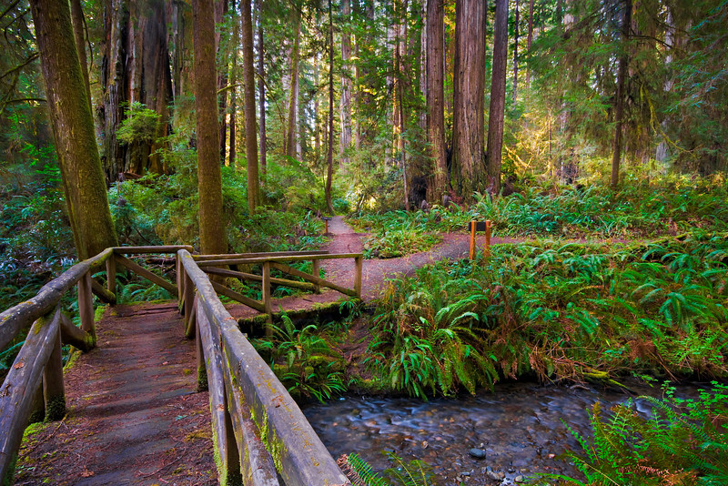 """Path Through the Redwoods"" Prairie Creek, Redwood National Park, California.  I stumbled upon this bridge in the Prairie Creek portion of Redwood National Park (I crept out while visiting the inlaws!).  I had hoped to get out and take pictures before the fog broke, but the sun started beaming through the redwoods in the background.  I was able to tame the light and capture this image.  I love the feeling you get just walking across the bridge and the choices of the two paths to take.  I am inspired to capture those places I want to be on a Friday afternoon.    I am debuting this week my latest images from my award winning trip to Yosemite.   <a href=""http://www.jharrisonphoto.com/gallery/7554507_MVWMR""target=""_blank"">My Yosemite can be seen here.</a>   Let me know which ones you like!  Thanks, John"