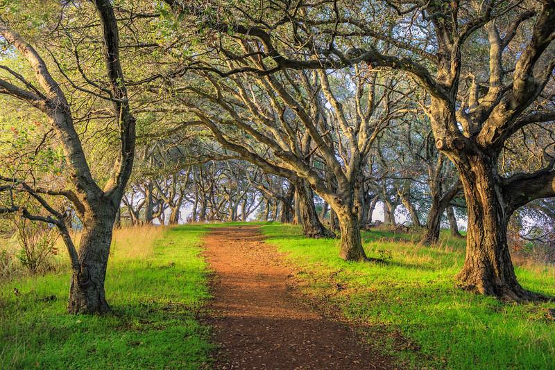 """Walking Through the Trees"""