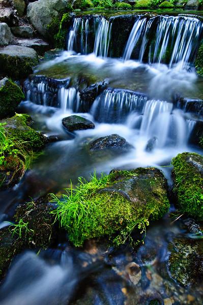 Fern Springs in Yosemite National Park