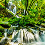 """Spring Waterfalls at Mt Tam"" This was an amazing hike right after the heavy rains at Cataract Falls in Mt Tam, north of San Francisco. We don't get much rain here in the SF Bay Area, but when we do, it can be amazing! Lush green moss with flowing creeks and trees everywhere! Please share the photo if you like it! I'll post a link to the trail as it is another beautiful place to be for a hike here in the Bay Area!"